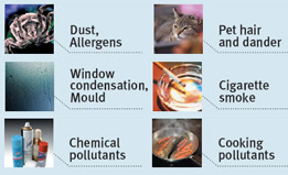 Allergens reduced by air purification systems